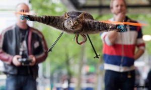 cat-quadcopter-flying