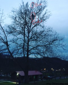 fixed-wing-rc-plane-stuck-in-high-tree-bixler-reaching