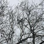 fixed-wing-rc-plane-stuck-in-tree
