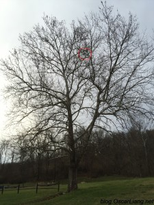 fixed-wing-rc-plane-stuck-in-tree-bixler-high